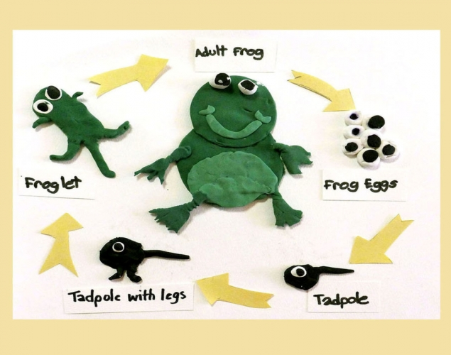 Life Cycle Of A Frog Shape Colour Mixing Crayola Teachers